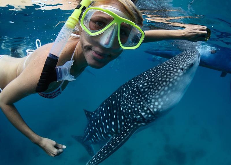 Cancun S Whale Shark Season 2014