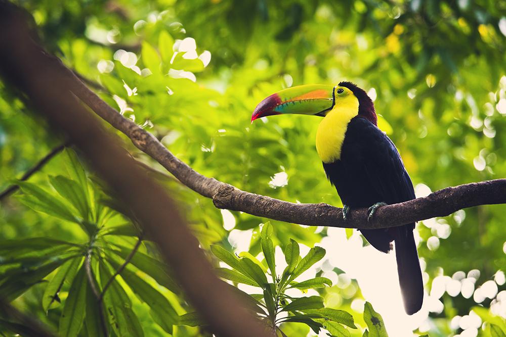 A Birder's Haven