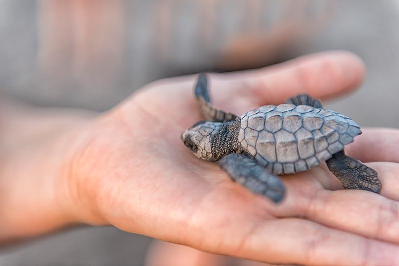 Keeping Sea Turtles Safe