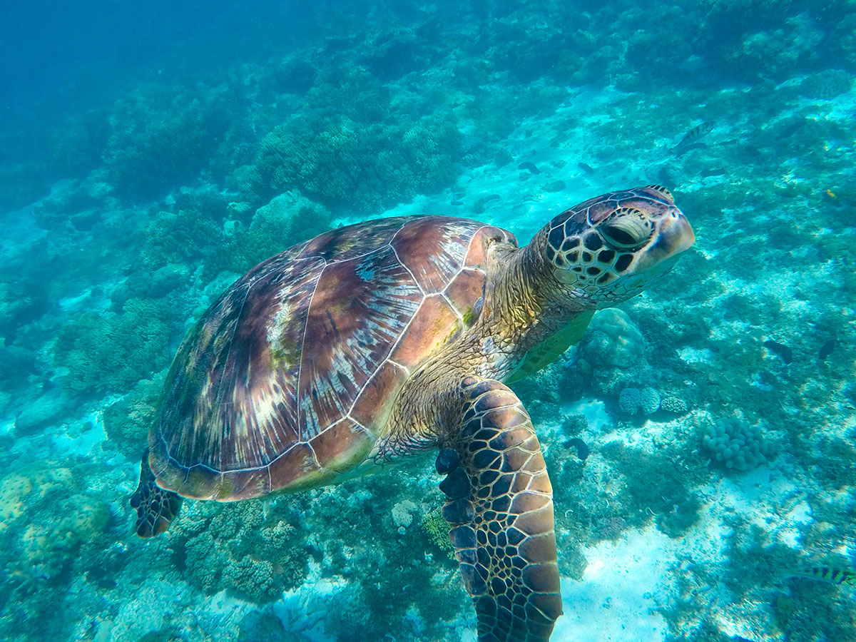 The Enchantment of Sea Turtles in Cancun