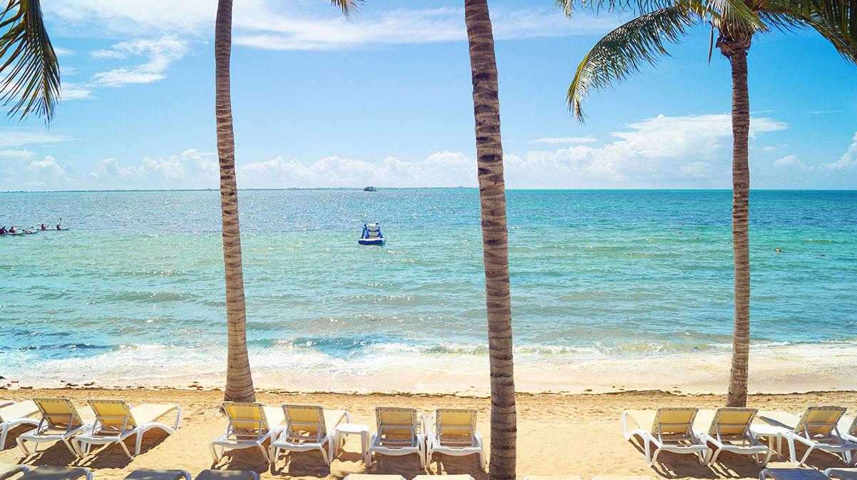 Sargassum monitoring: Cancun beaches without sargassum