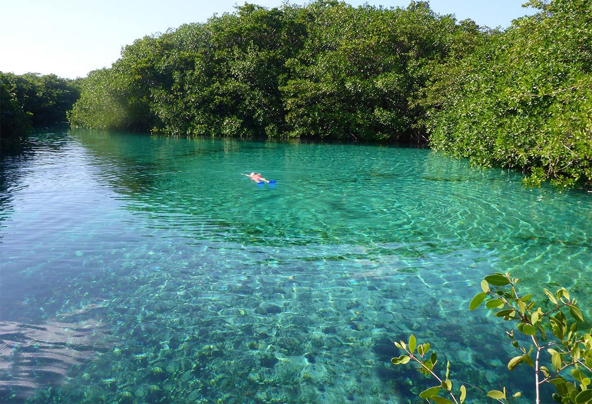 Cenotes: Natural Havens in Cancun and the Riviera Maya